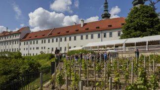 Netradiční procházka Prahou: Neuvěříte, kde všude se pěstuje víno
