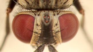 Hmyzí armáda číhá za dveřmi: Jak docílit toho, aby tam zůstala a nelétala dovnitř