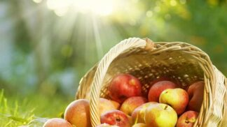 Babiččina receptura: Kompot z letních jablek osvěží a pomůže se zácpou