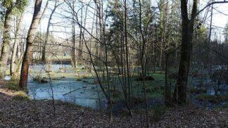 Branišovský les, místo opředené záhadami. Co vše se o něm vypráví?