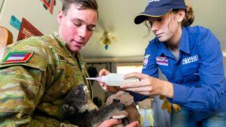 Tvrdí chlapi a bezbranná zvířata. Vojáci, kteří likvidují australské požáry, pomáhají i medvídkům koala