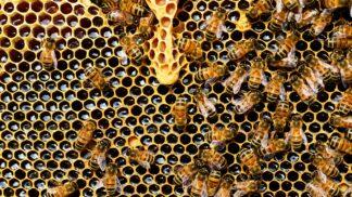 Krásné valentýnské dílo přírody. Včely ve svém úlu vytvořily nádherné srdce